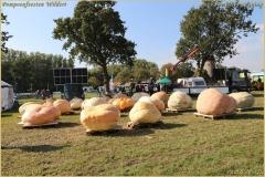 Pompoenfeest Wildert Weging-171-BorderMaker