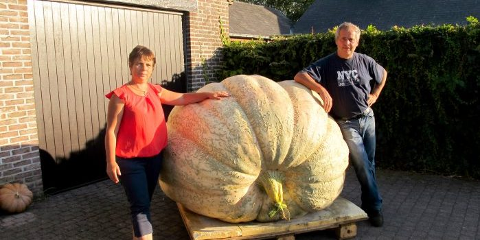 Giant pumpkin Herman Boonen (more than 1000kg) 2018