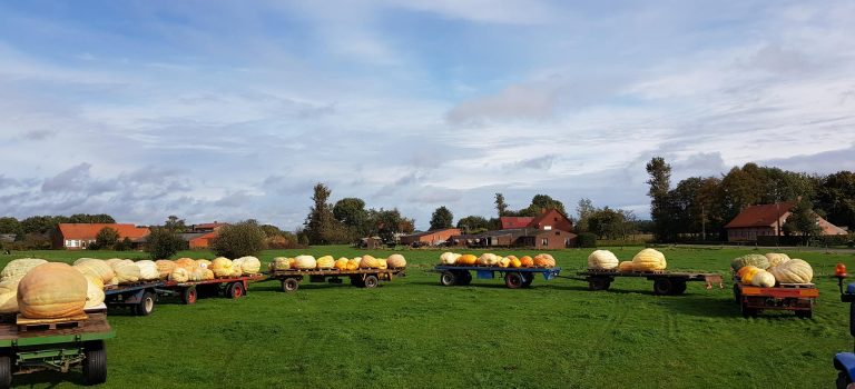 Loading Pumpkins